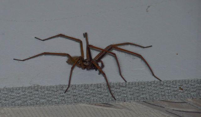 quel sorte d'araignée? 04.41