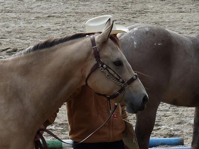 Pepete et Silver photos récentes 10.305