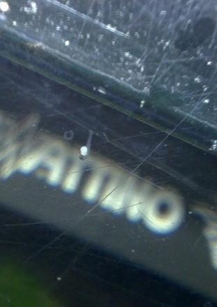 naturelle - Repro semie naturelle CT Grizzle 24.112