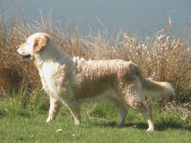 photos de mes chiens  23.114
