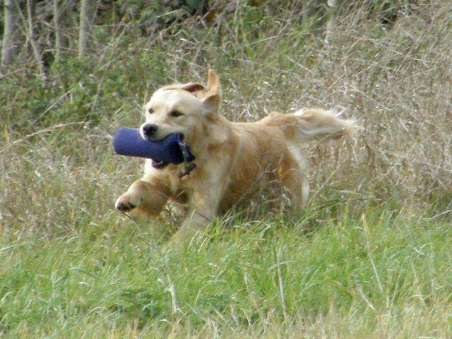 photos de mes chiens  23.116