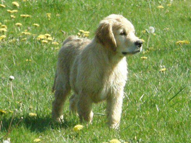 photos de mes chiens  23.118