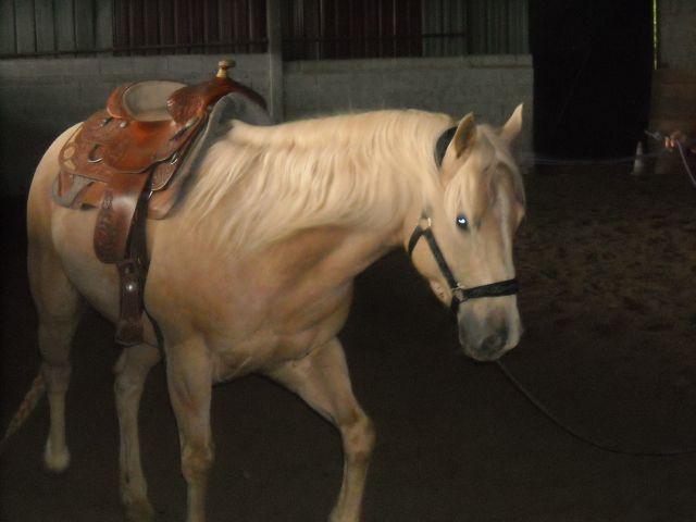 King, notre nouveau quarter horse 05.274