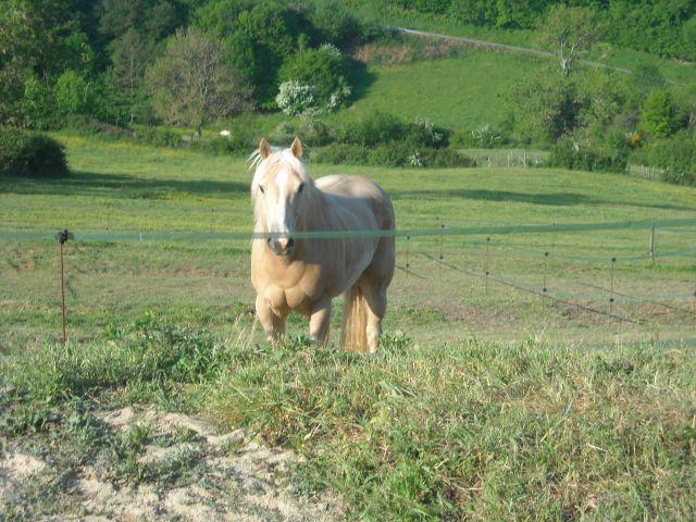 King, notre nouveau quarter horse 05.275