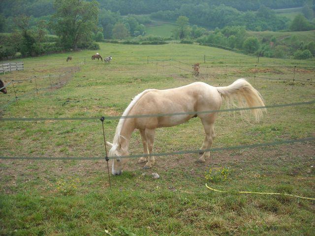 King, notre nouveau quarter horse 05.277