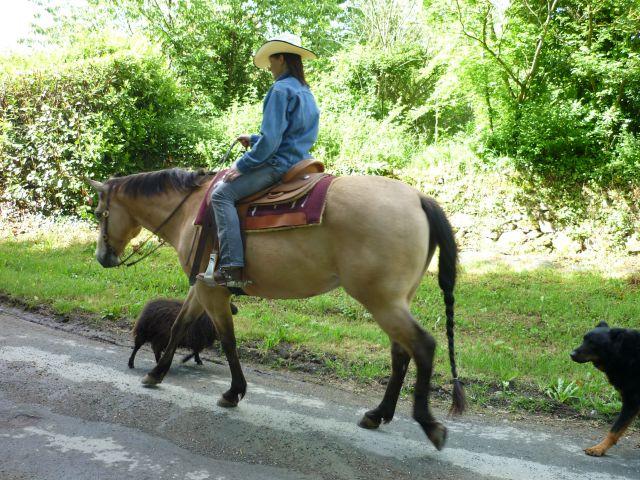 King, notre nouveau quarter horse 08.237