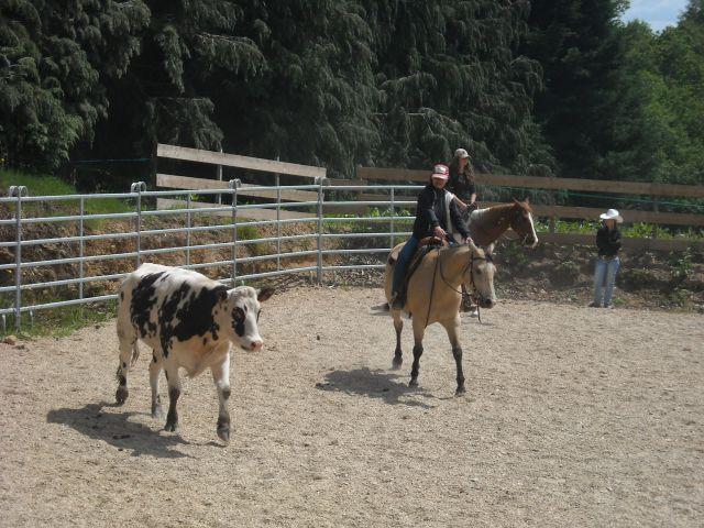 Stage travail du bétail 27.289