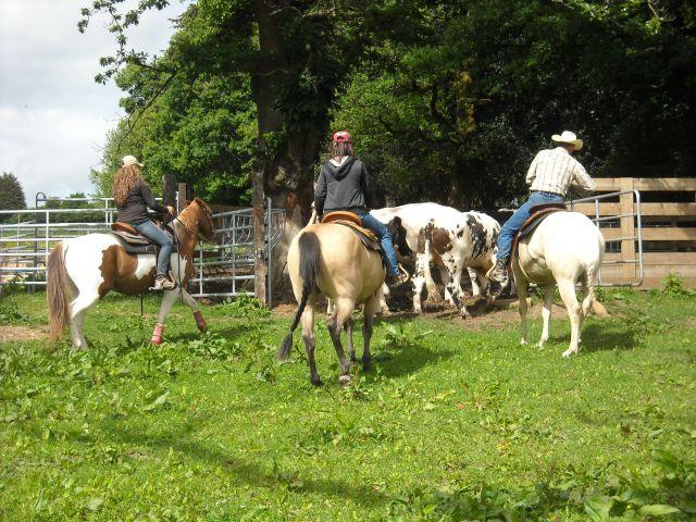 Stage travail du bétail 27.299