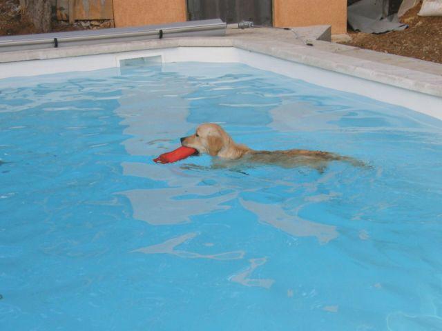 piscine pour goldinous 09.120