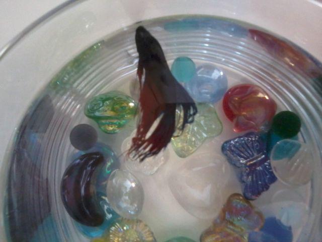 Mon poisson reste à la surface - Page 2 02.92