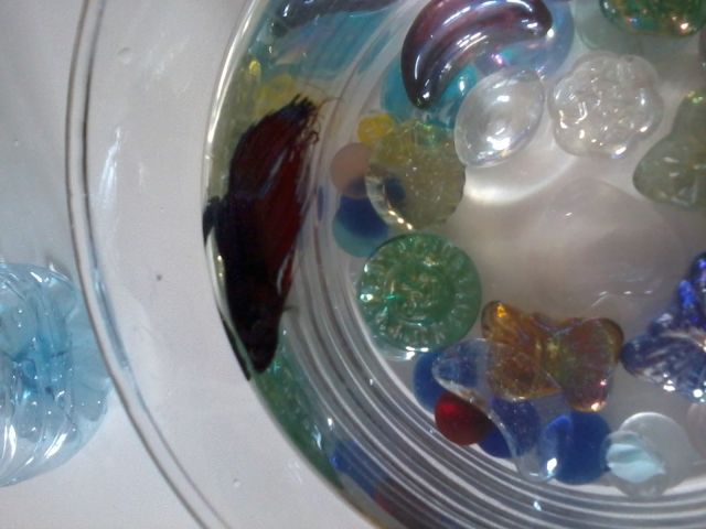 Mon poisson reste à la surface - Page 2 02.93