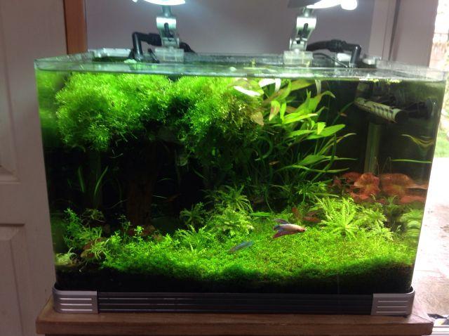 Aqua 40l jungle  16.8