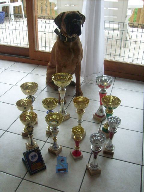 Malinois, besoin infos et conseils - Page 4 05.42
