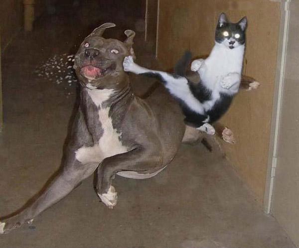 Imagenes graciosas Fotos-graciosas-perros-gatos