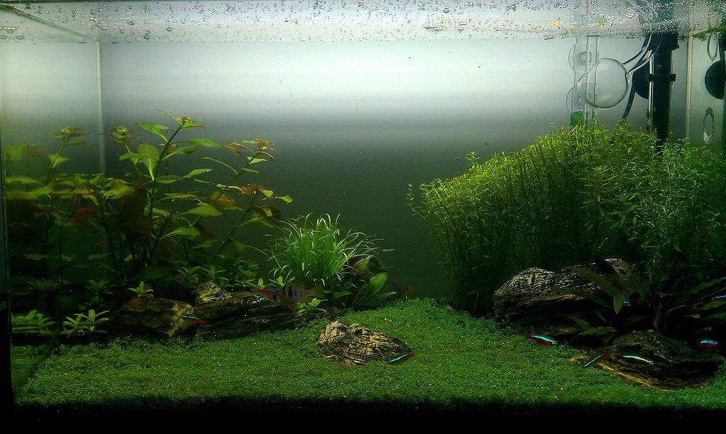Ayuda con una alga. - Página 4 41483af026ad0cf6e8a7c058a9f909c0o