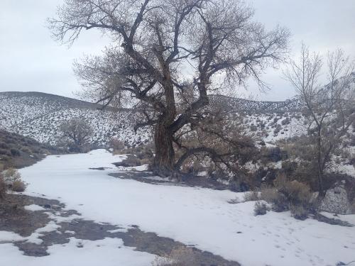 Ruinas que encontre el el nortoeste de nevada 22 dic 2013 7434e81cf36fc16612354ee3130af9afo