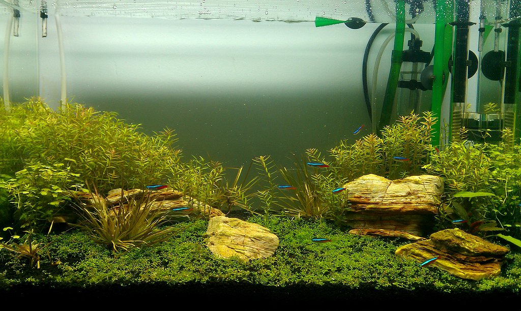 Ayuda con una alga. - Página 2 B60967864fe78eef69542d073374f7afo