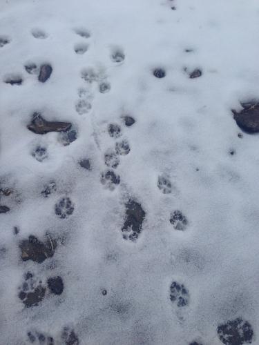 Ruinas que encontre el el nortoeste de nevada 22 dic 2013 E666878bb3c8d76586cdb684f1ee697ao