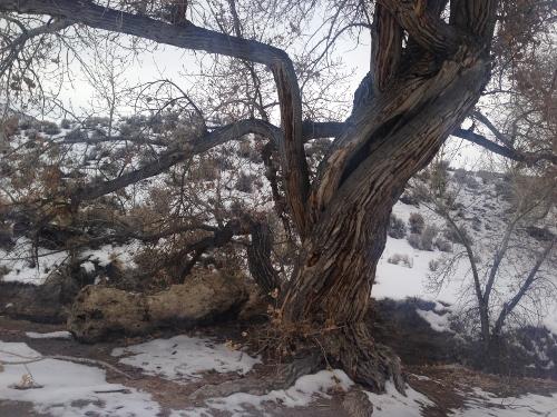 Ruinas que encontre el el nortoeste de nevada 22 dic 2013 F23556ad7e43f63897d645dee85ab163o