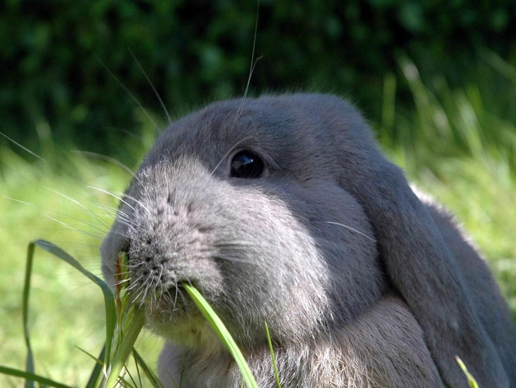 Фотографии разных животных 30033