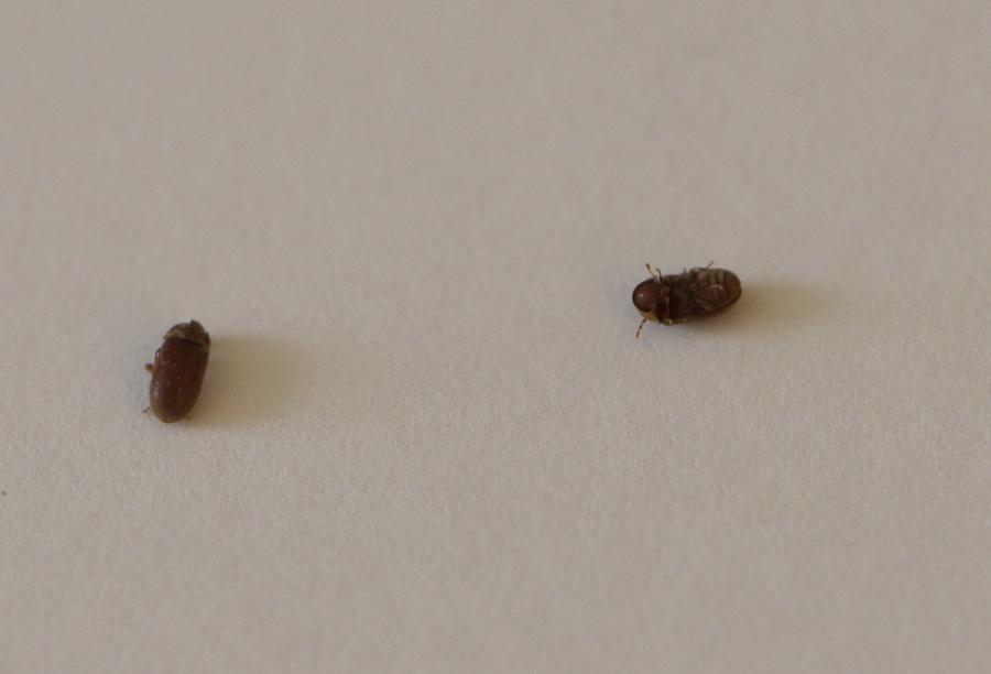Au secour c'est l'invasion, qui sont ces insectes ? DSC_6783