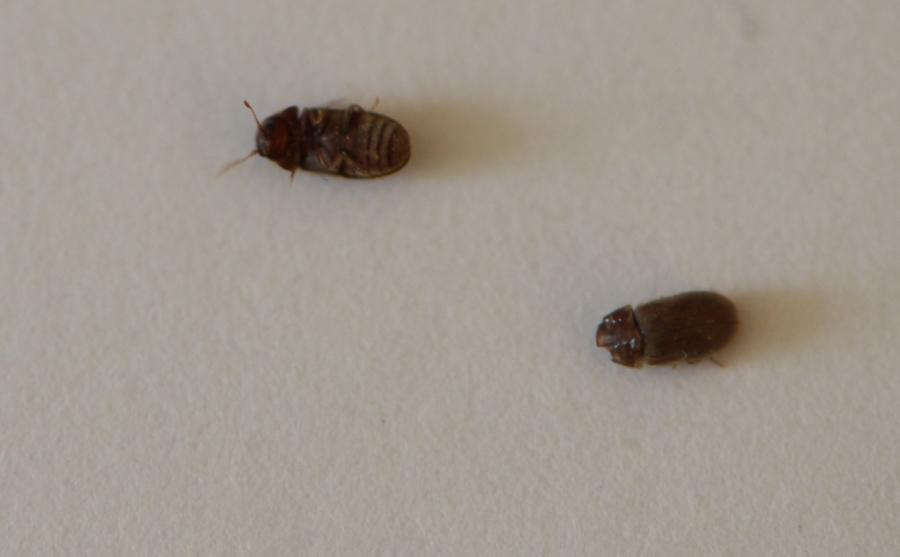 Au secour c'est l'invasion, qui sont ces insectes ? DSC_6785