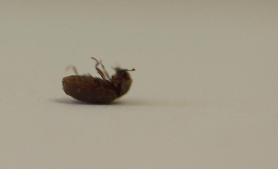 Au secour c'est l'invasion, qui sont ces insectes ? DSC_6787