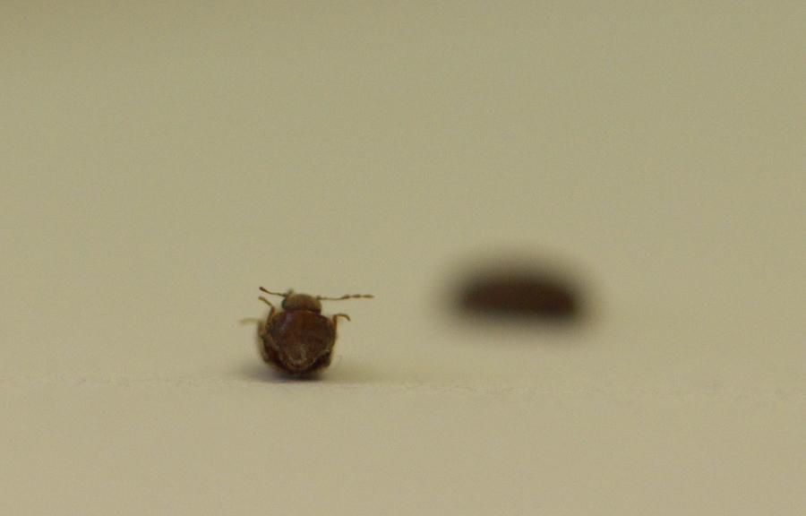 Au secour c'est l'invasion, qui sont ces insectes ? DSC_6796