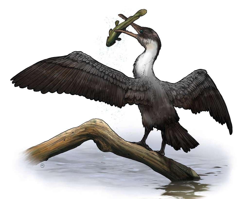 Fossile : un oiseau à dents découvert dans l'Arctique canadien ! Par Jean-Luc Goudet 7cf8d5b2ba_100156_oiseau-prehistorique-phanerozoicbay