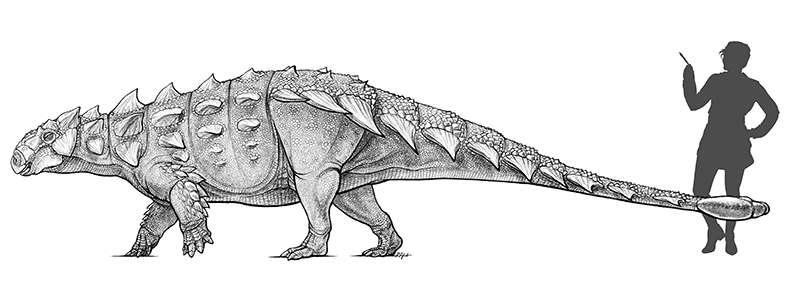 Dinosaure : des paléontologues ont retrouvé Zuul de S.O.S. Fantômes ! By Laurent Sacco Aa53130a99_106988_zuul-crurivastator-2-danielle-dufault-royal-ontario-museum