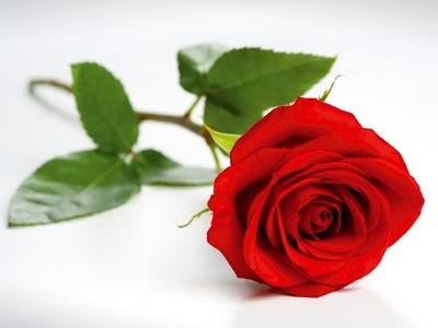 [JEU] 3 images = 1 film ValentineRose