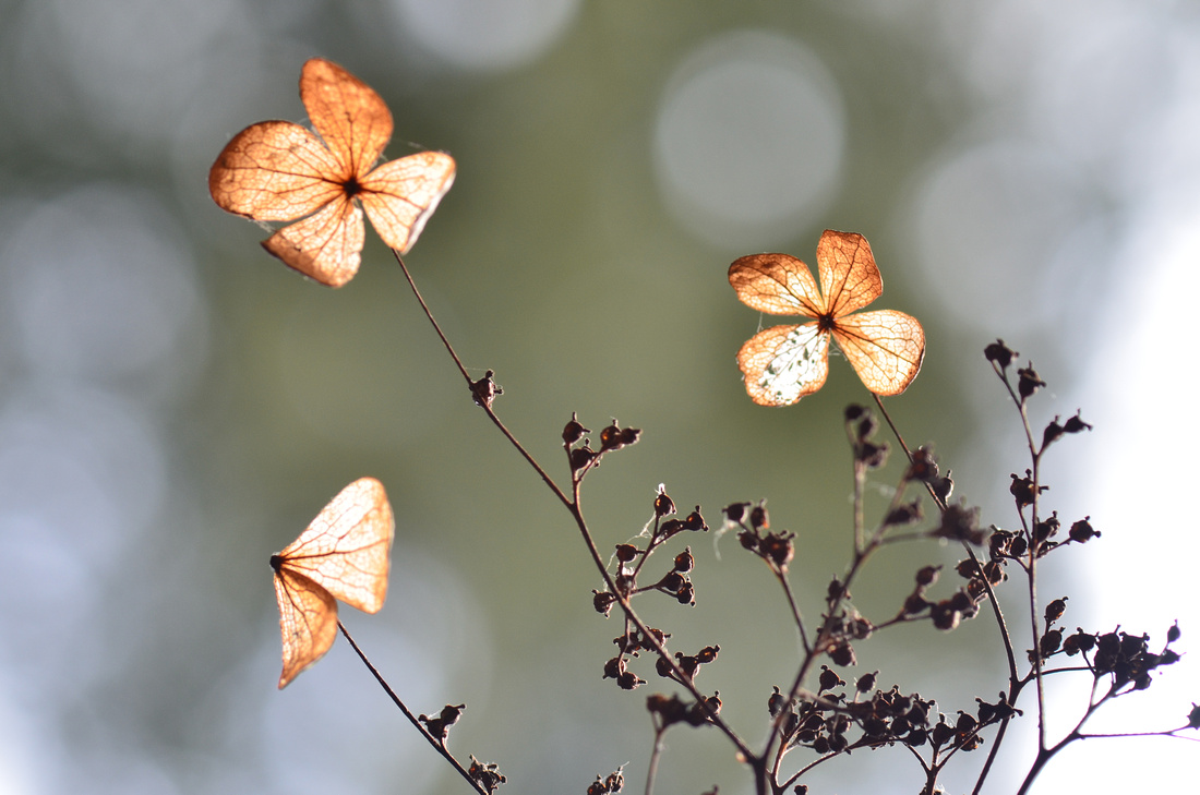 Petites fleurs P919247038-5