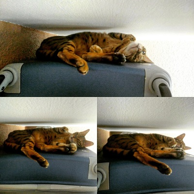 Le chat IMG_20150706_151510