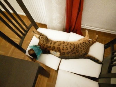 Le chat IMG_20150707_222307