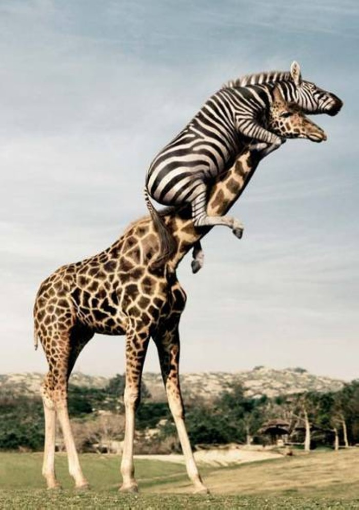 Insolite  animaux . - Page 9 F201306270905013183130691