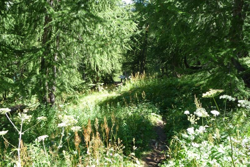 Le Sentier Botanique, Sentier Découvert - Départ du Lavachet 08