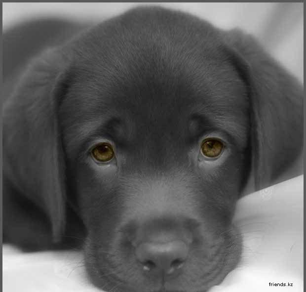 всё про собак 1230971675_28