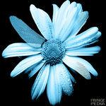 Glyph Codes 150px-FlowerGlyph