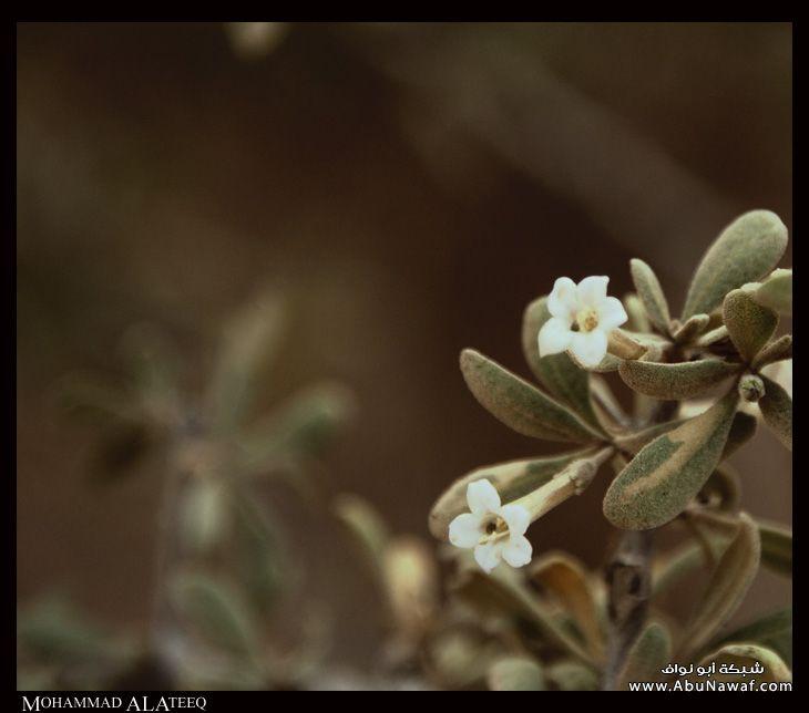 الخريم - عروس الرياض 17091_11231139985