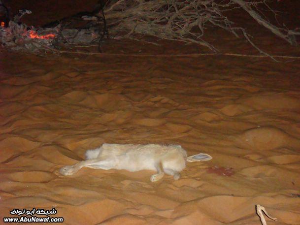 اليمن - صيد Get-6-2009-almlf_com_0x1fqnvn