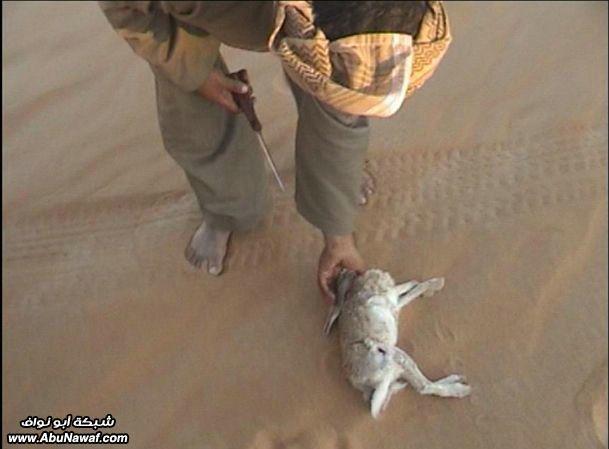 اليمن - صيد Get-6-2009-almlf_com_2gxtlbv1
