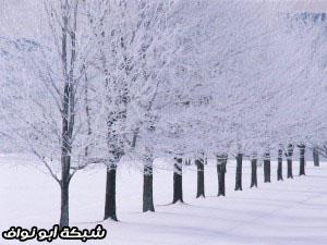 هل تحب الصيف ام الشتاء 1