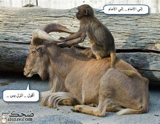 هههههههههه روووعة YAGIrDEeIsGCrrxb