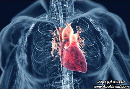 صور : أكثر 10 أمراض بالعالم فتكاً بالبشر Cardiovascular