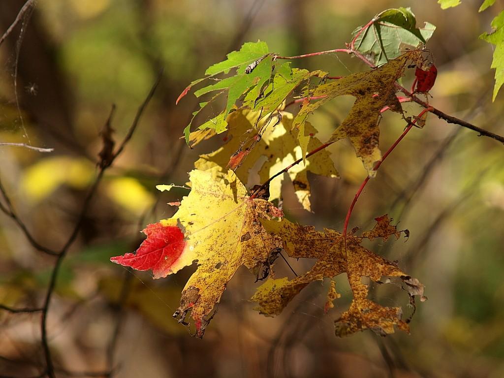 Un automne qui passe trop vite cette année... 51C10C044895459485AB3F1543C3ED28