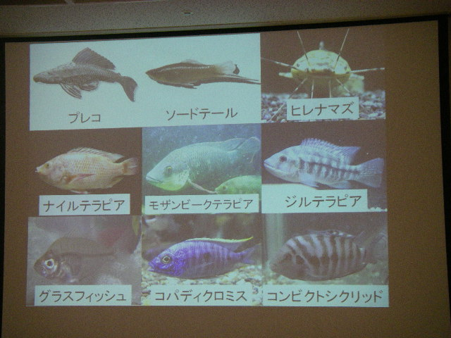 identification d'espèce invasive  Simadu05