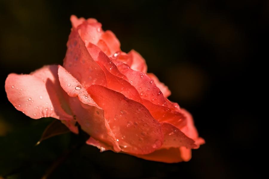 Après la pluie 2009062809315741