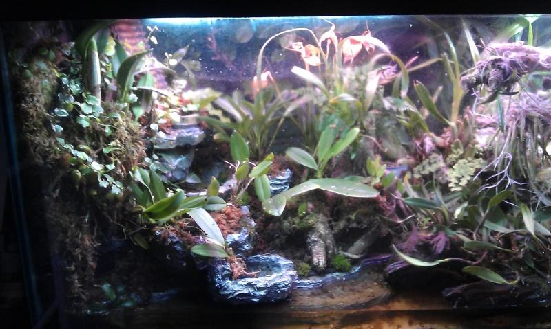 Orchidarium dans un aquarium - Page 2 IMAG0657