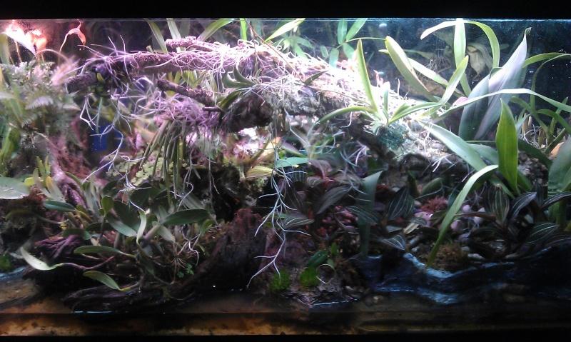 Orchidarium dans un aquarium - Page 2 IMAG0658