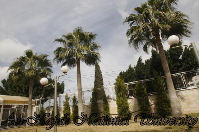 جولة مصورة في جامعة فلسطينية Old%20Campus%20(63)